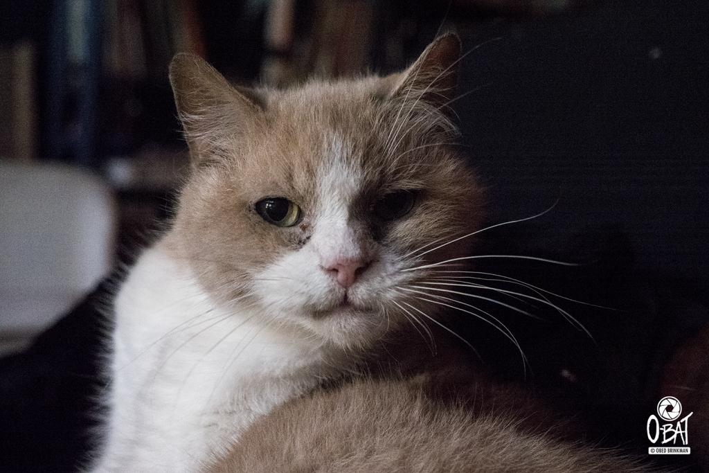 Eén van Audrey's katten